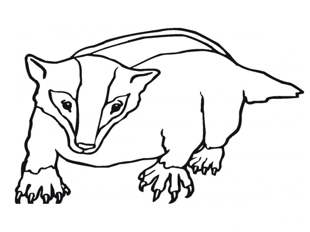 Badger Coloring Page