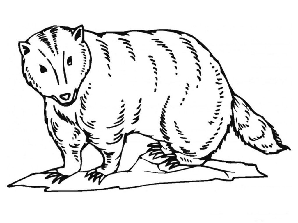 Badger Printable Coloring Pages
