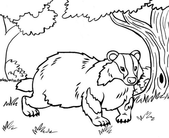 Badger In The Wild Coloring Page