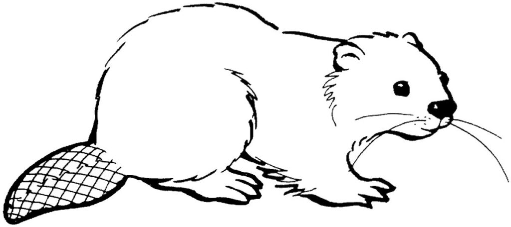 Cute Beaver Coloring Pages