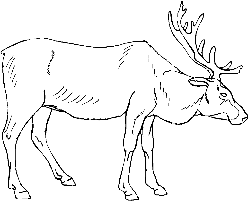 Elk Coloring Pages